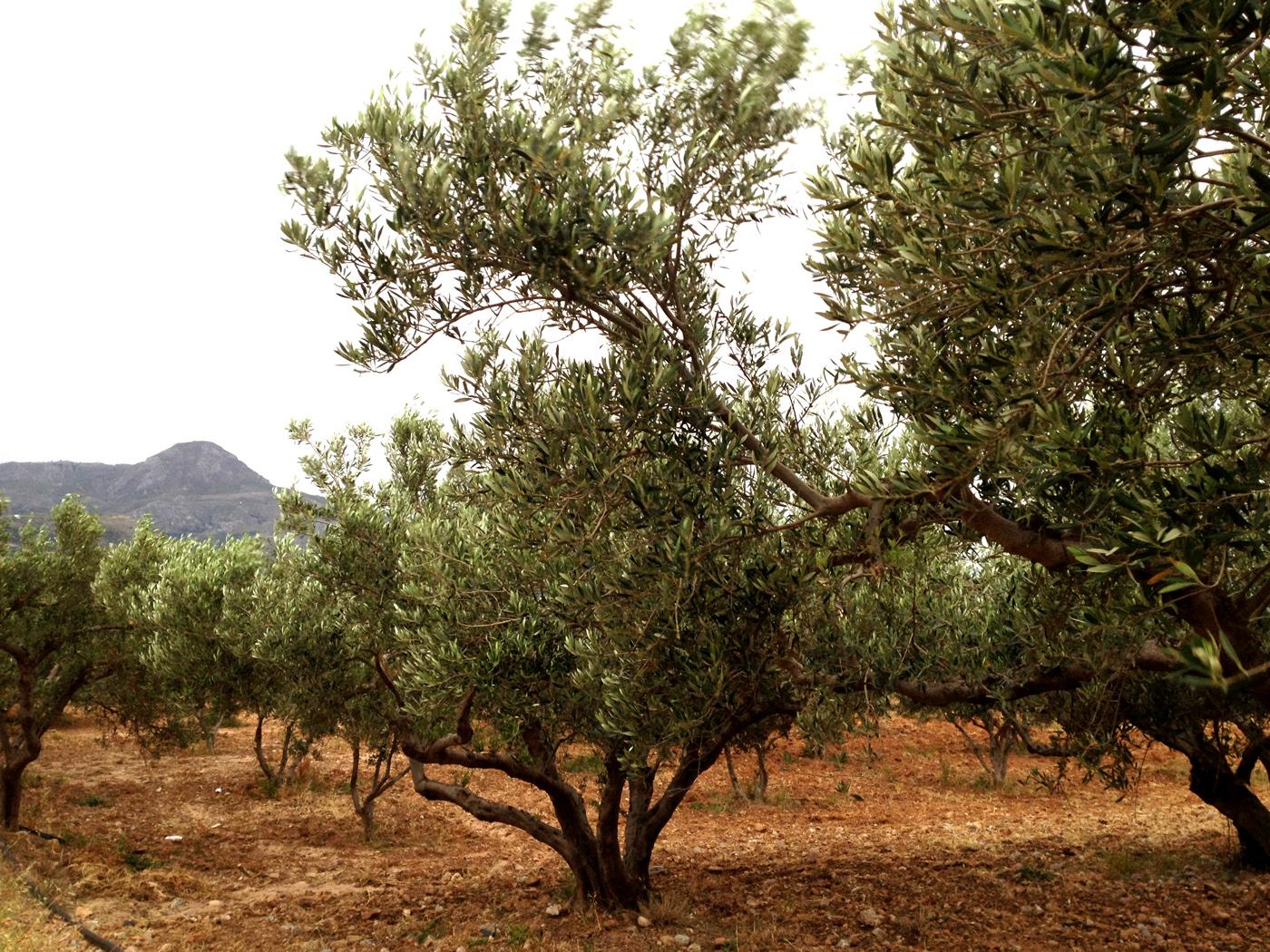 Aceitarium.com nace desde la admiración al aceite de oliva